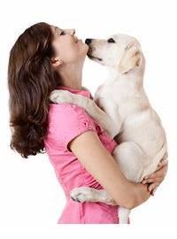 prestar atención a su perro