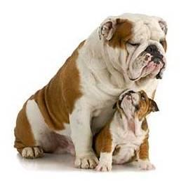 ayudar a su perro a envejecer bien