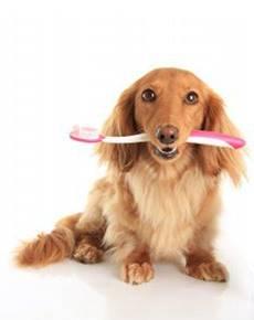 perro con un cepillo de dientes en la boca