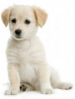 lindo perro