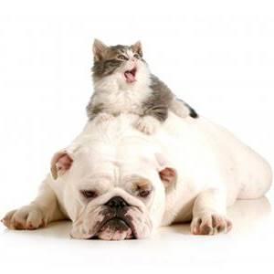 un gato sobre un perro