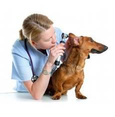 limpiar las orejas de un perro