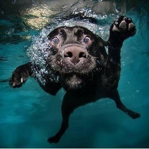 perro nadando bajo el agua