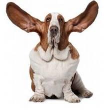 perro con orejas erguidas