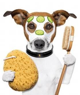 un perro limpio