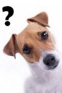 un perro que tenga preguntas